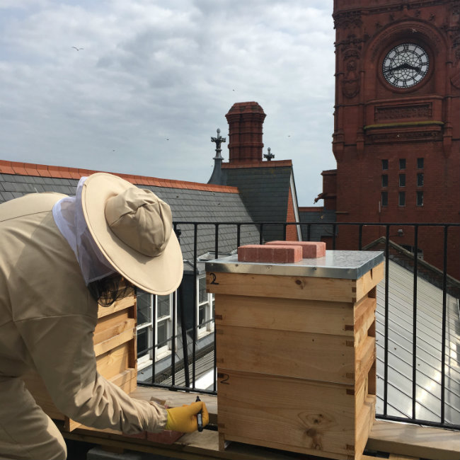 One of our volunteers monitoring the hives at the Pierhead
